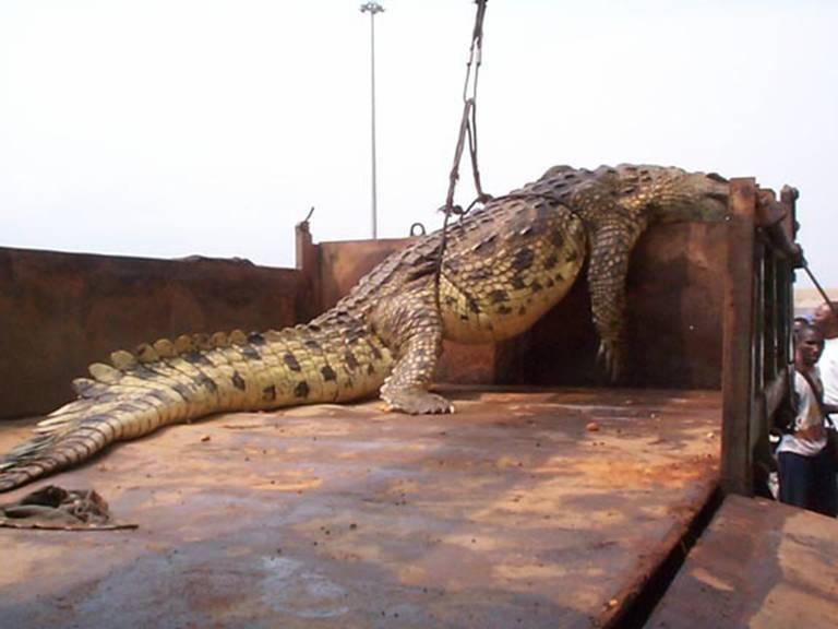 GatorTail